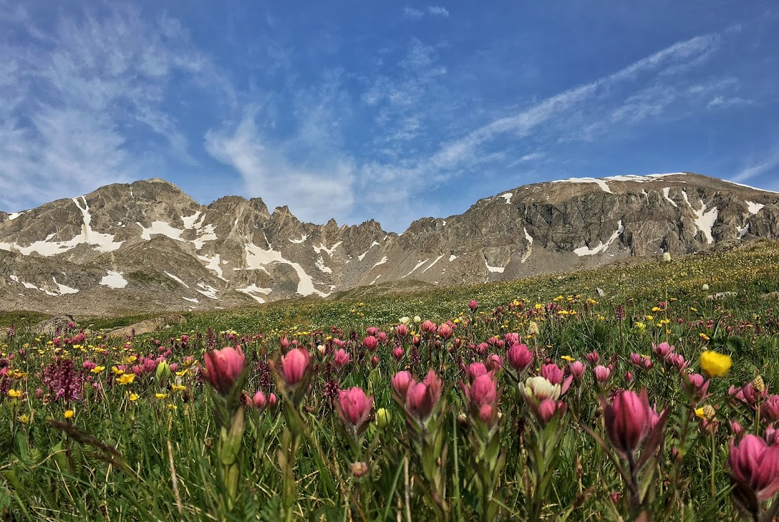 summit county native flowers